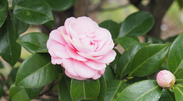 桜見物に行ってきたんだけどね その2_d0027243_232455.jpg