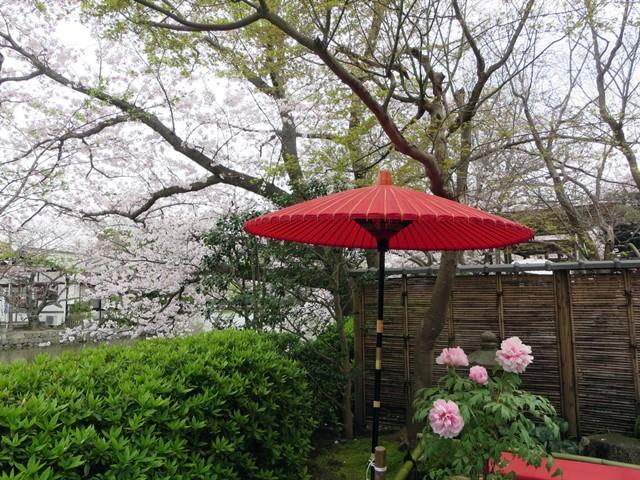 【鶴岡八幡宮】源氏池の桜と牡丹_b0009849_14261361.jpg