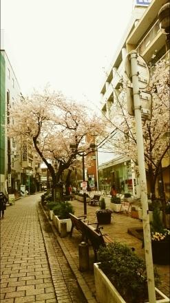 東京は桜が満開。_e0254750_10333724.jpg