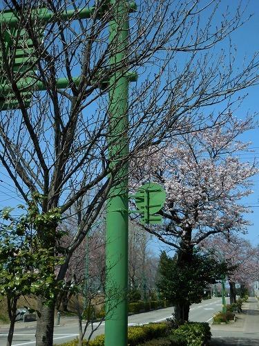 青い空と桜_c0327752_14374276.jpg