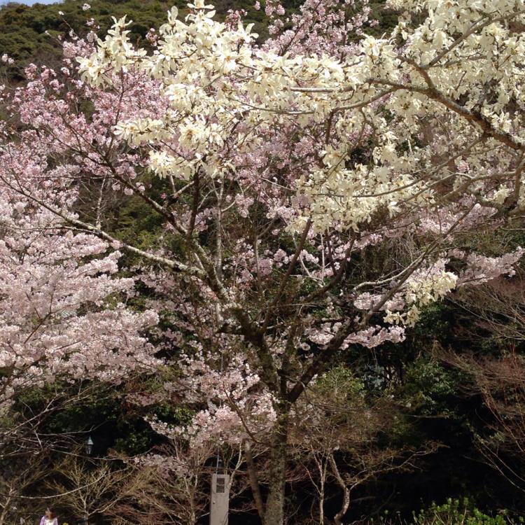 お花見にでかけよう!_c0185356_14594349.jpg