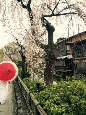 桜満開〜!_b0341759_16393283.jpg