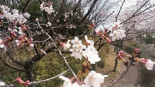 プチ便り( 春休み① )_a0206870_22525655.jpg