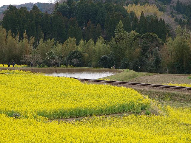 養老渓谷方面:石神の菜の花畑 ~ やまびこセンター ~ 幻の滝 (3/27)_b0006870_11433621.jpg