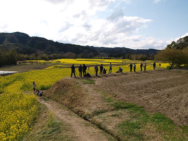養老渓谷方面:石神の菜の花畑 ~ やまびこセンター ~ 幻の滝 (3/27)_b0006870_11465315.jpg