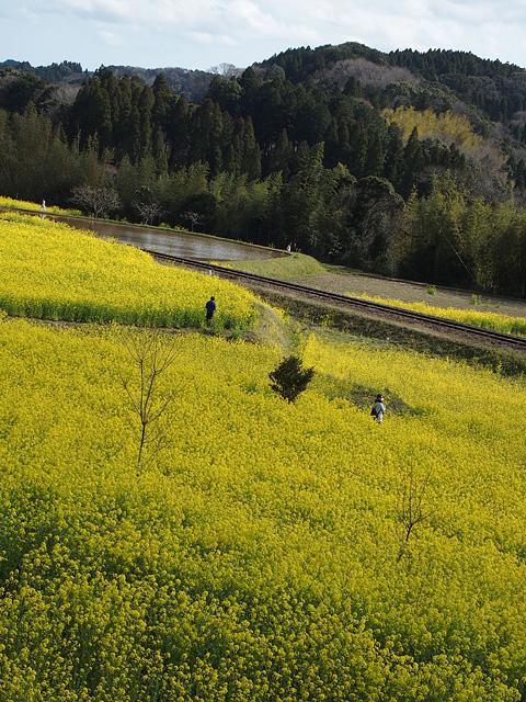 養老渓谷方面:石神の菜の花畑 ~ やまびこセンター ~ 幻の滝 (3/27)_b0006870_11484711.jpg