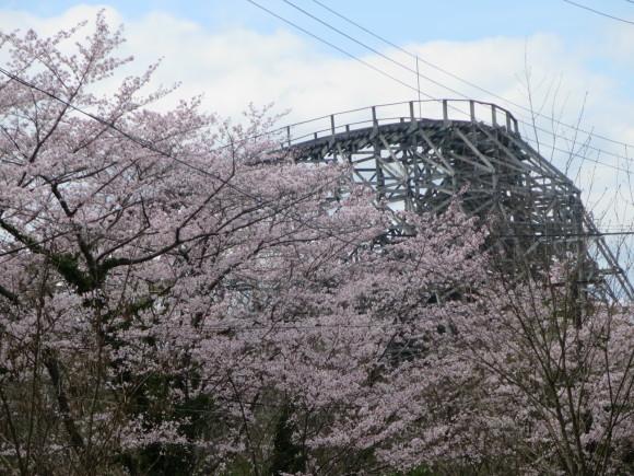 奈良、桜をめぐる散歩~そんなところは紹介せんでもええ~_c0001670_21573759.jpg