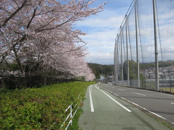 奈良、桜をめぐる散歩~そんなところは紹介せんでもええ~_c0001670_21580100.jpg