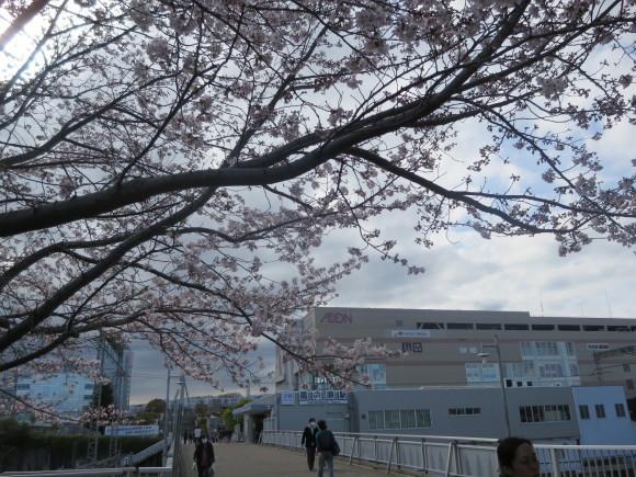 奈良、桜をめぐる散歩~そんなところは紹介せんでもええ~_c0001670_22001722.jpg