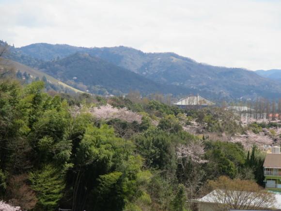 奈良、桜をめぐる散歩~そんなところは紹介せんでもええ~_c0001670_22005746.jpg