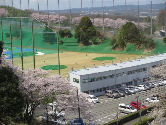 奈良、桜をめぐる散歩~そんなところは紹介せんでもええ~_c0001670_22042648.jpg