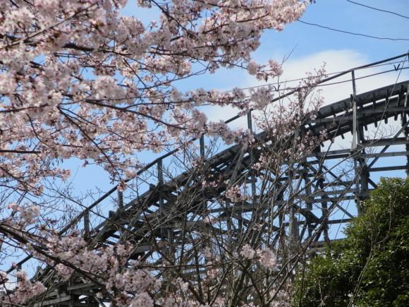 奈良、桜をめぐる散歩~そんなところは紹介せんでもええ~_c0001670_22060226.jpg