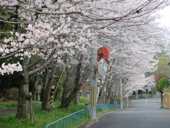 奈良、桜をめぐる散歩~そんなところは紹介せんでもええ~_c0001670_22191047.jpg