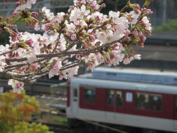 奈良、桜をめぐる散歩~そんなところは紹介せんでもええ~_c0001670_22205949.jpg