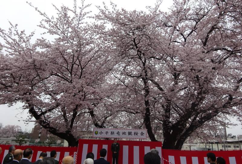お花見_f0059673_23543665.jpg