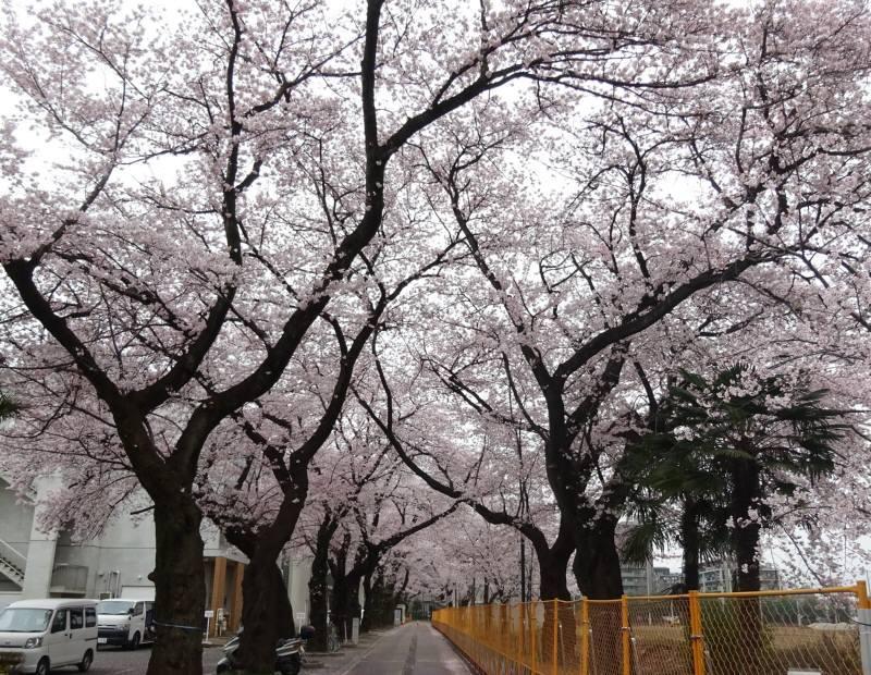 お花見_f0059673_23561014.jpg