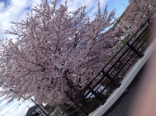 桜の季節とペニンシュラ_f0206977_13520420.jpg