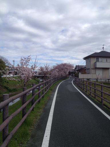 桜の季節とペニンシュラ_f0206977_13520498.jpg