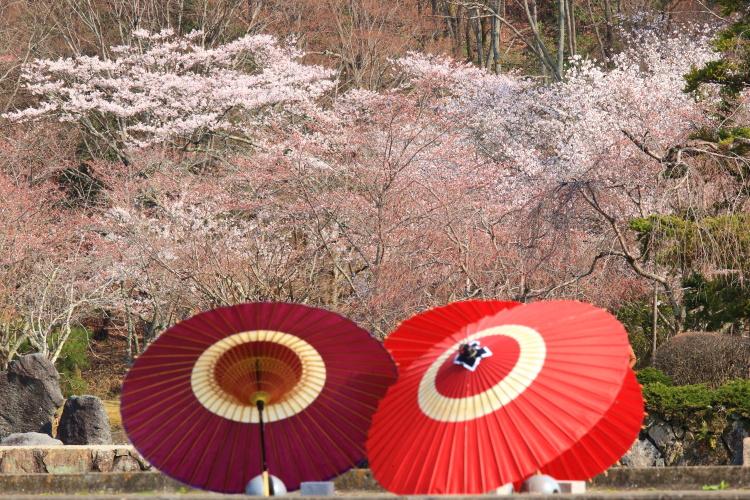 国立京都国際会館_e0051888_23442081.jpg