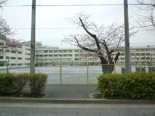 ポタリング 目黒川の花見_a0262093_12170715.jpg