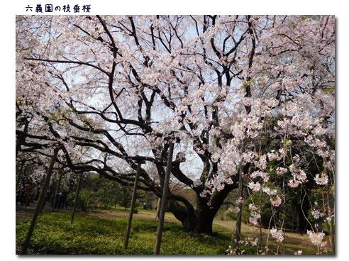 お花見 Week_c0051105_012333.jpg