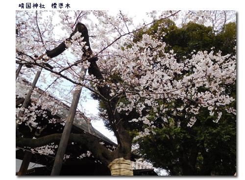 お花見 Week_c0051105_012579.jpg