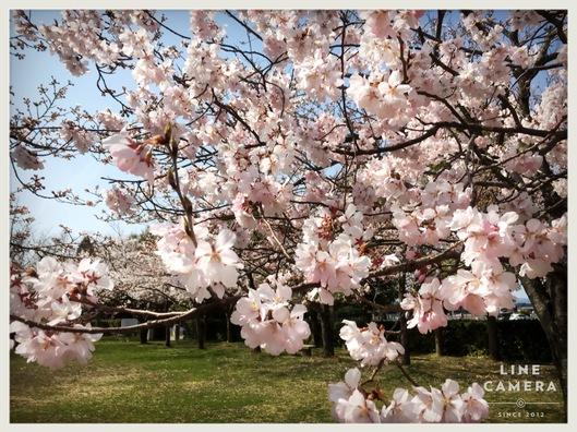 春のキャンペーン始まります゚・*:.。. .。.:*・゜_e0151409_11222670.jpg