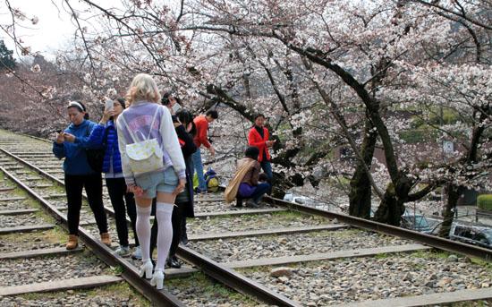 桜だより24 インクライン_e0048413_14402916.jpg