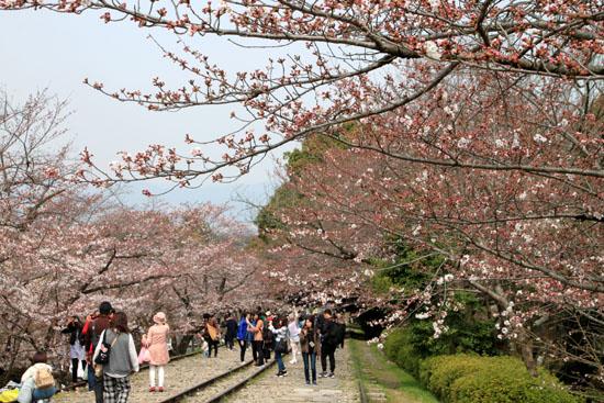 桜だより24 インクライン_e0048413_1440395.jpg