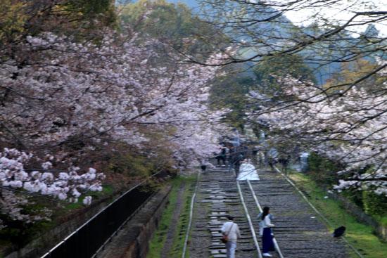 桜だより24 インクライン_e0048413_14411139.jpg