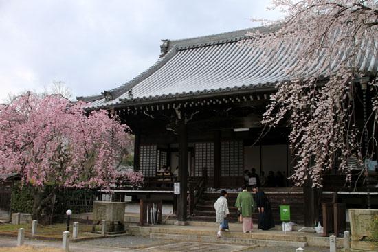 2016桜だより25 妙満寺_e0048413_154265.jpg