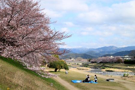 2016桜だより26 鴨川満開_e0048413_15503224.jpg