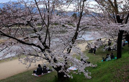 2016桜だより26 鴨川満開_e0048413_15514571.jpg