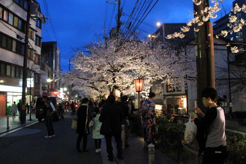 2016桜だより27 高瀬川夜桜_e0048413_16511480.jpg