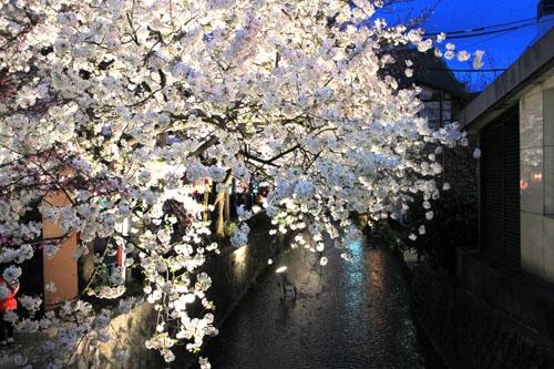 2016桜だより27 高瀬川夜桜_e0048413_16514484.jpg