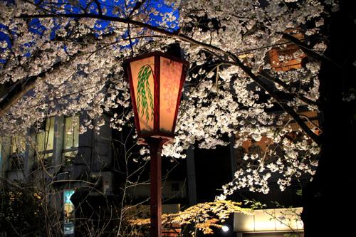 2016桜だより27 高瀬川夜桜_e0048413_16515669.jpg
