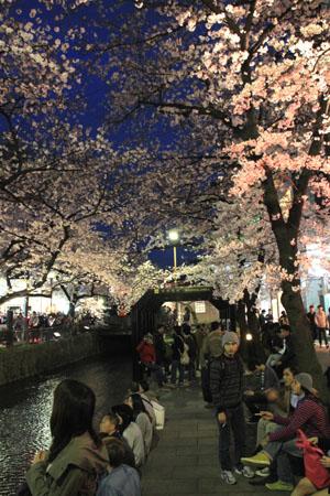 2016桜だより27 高瀬川夜桜_e0048413_16523085.jpg