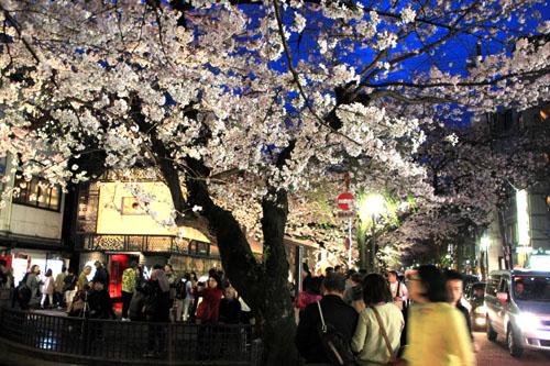 2016桜だより27 高瀬川夜桜_e0048413_16524199.jpg
