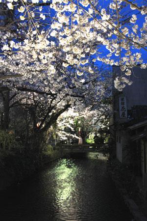 2016桜だより27 高瀬川夜桜_e0048413_165265.jpg