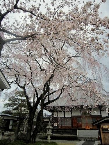 ギャラリーカフェ 茶居 chai & 桜 @あきる野_b0157216_1925217.jpg