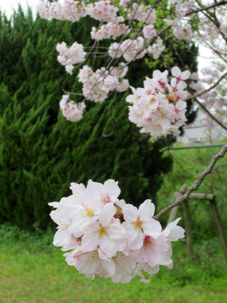 ■春たけなわ、西ノ堤池の片隅で_d0190217_2320257.jpg