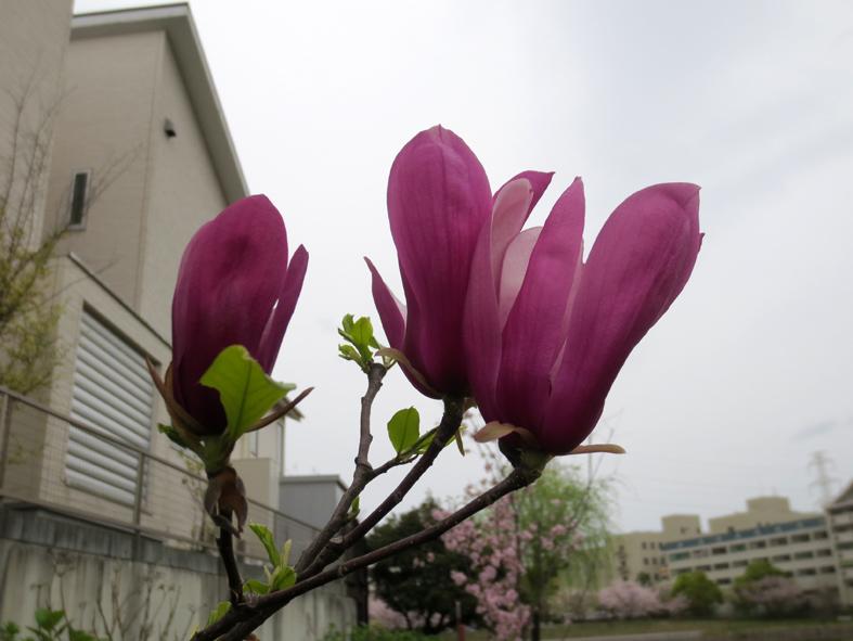 ■春たけなわ、西ノ堤池の片隅で_d0190217_232749100.jpg