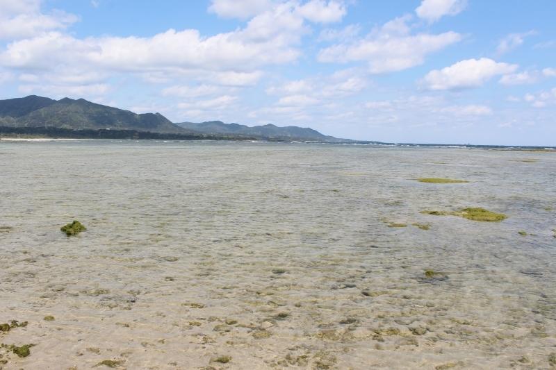 島へ、お茶旅3_b0220318_17382493.jpg