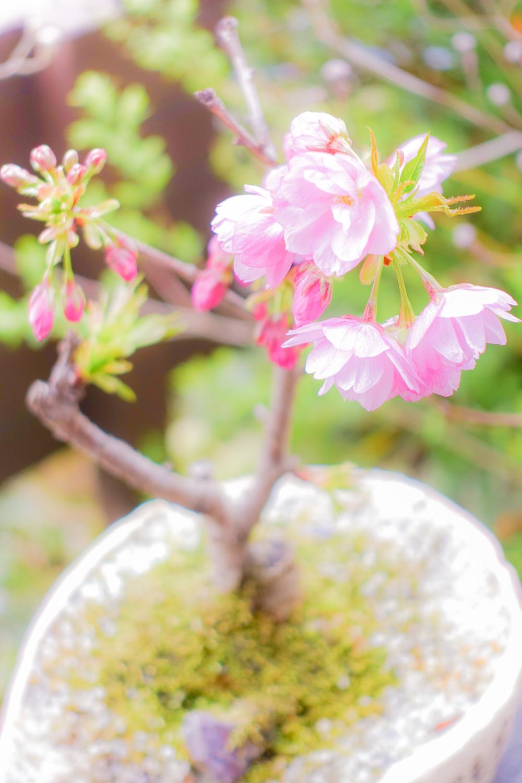 咲きました_c0220824_16564904.jpg