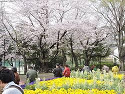 春菓遊楽-風流堂_d0065324_224177.jpg