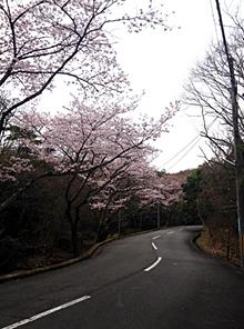 目神山のさくら_e0103024_09513345.jpg