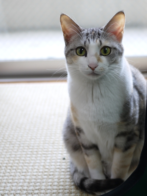 猫のお留守番 はるちゃんソルくん編。_a0143140_17485066.jpg