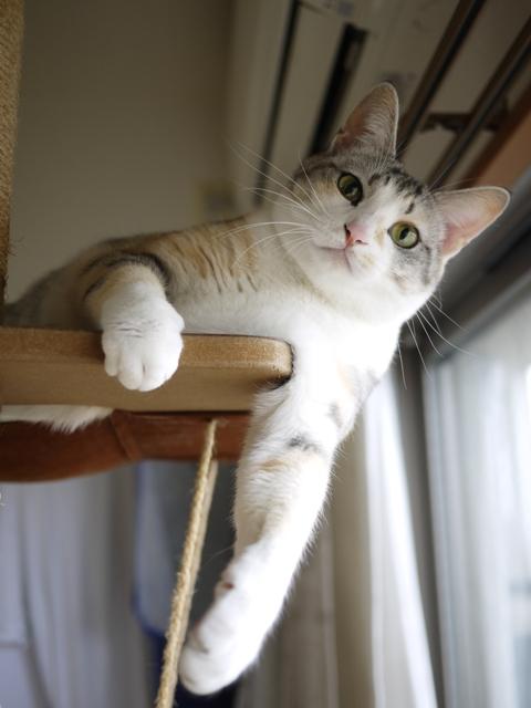 猫のお留守番 はるちゃんソルくん編。_a0143140_1751411.jpg