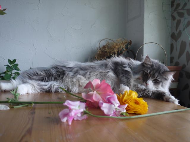春を告げる花々と戯れるウーラちゃん。_e0356356_12202064.jpg