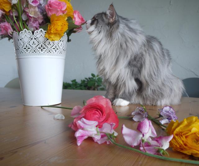 春を告げる花々と戯れるウーラちゃん。_e0356356_12205361.jpg